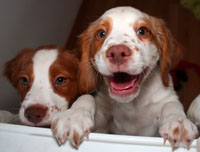 photo: puppies playing