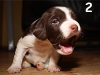 photo: puppy at 2 weeks old