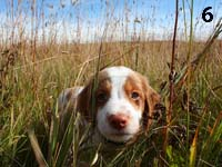 photo: 6 week old puppy standing in grass